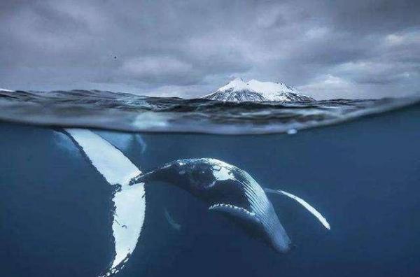鲸爆和鲸落的区别